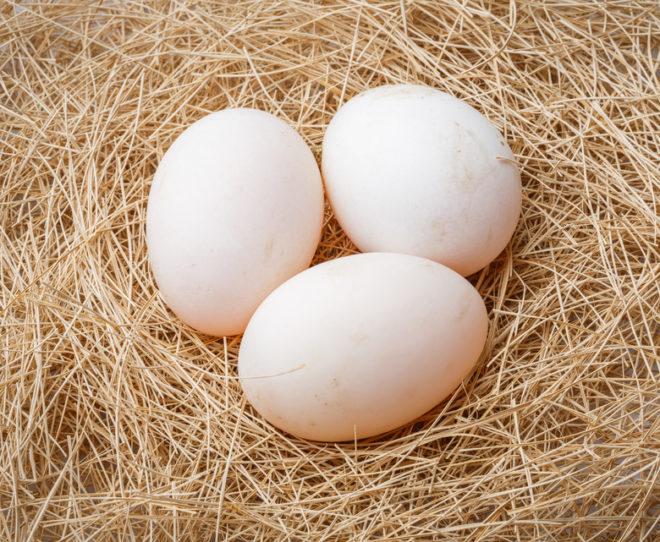 Почему снижается количество яйцеклеток